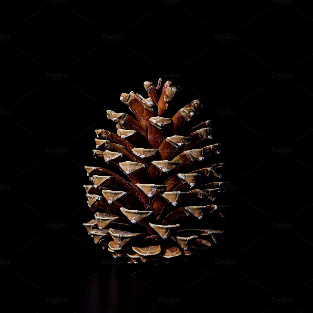 pinecone for club quarantine